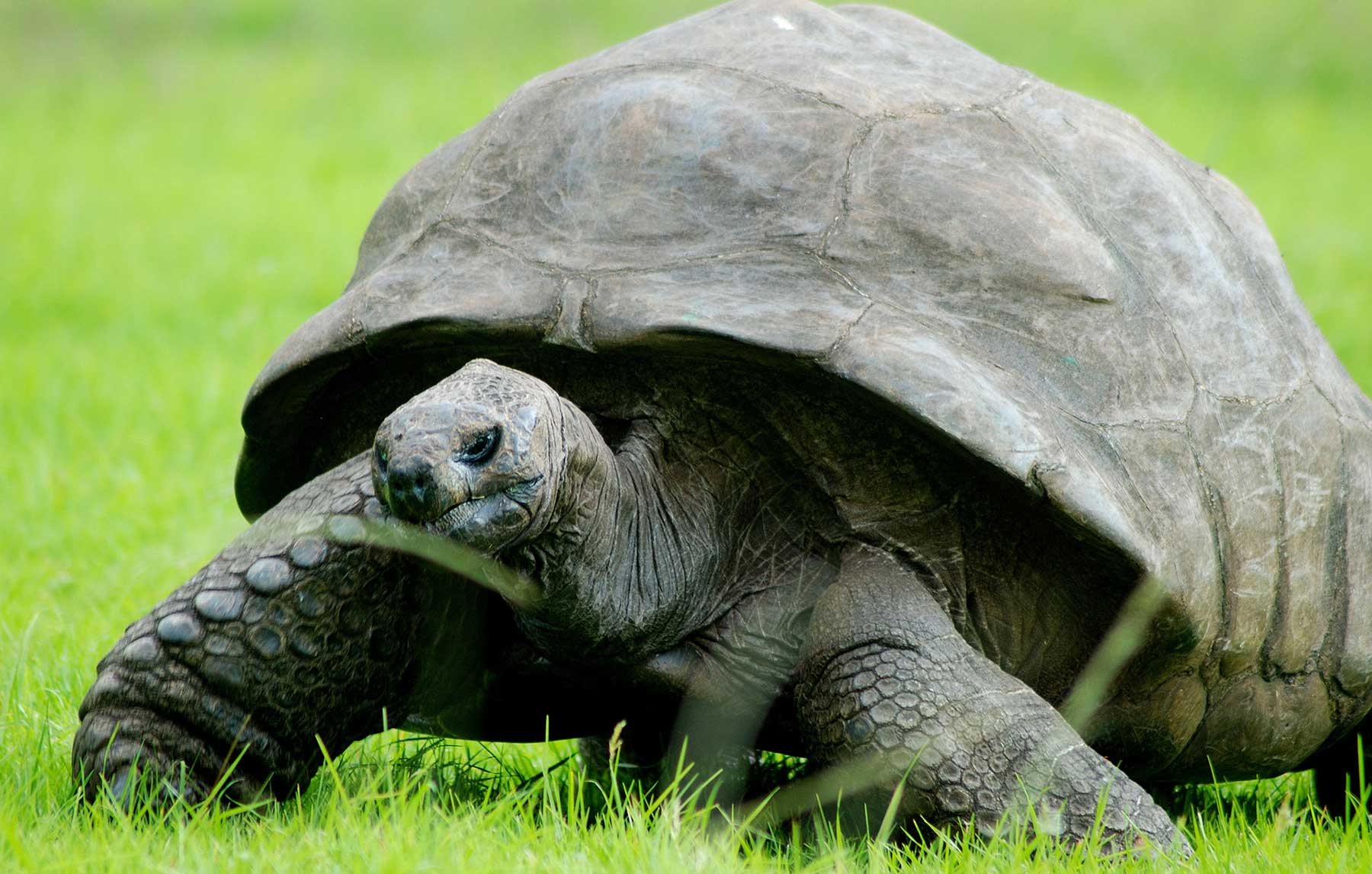 Is your tortoise acting weird, this is why! header photo