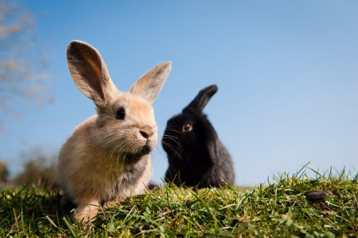 Rabbits and Their Social Structure image