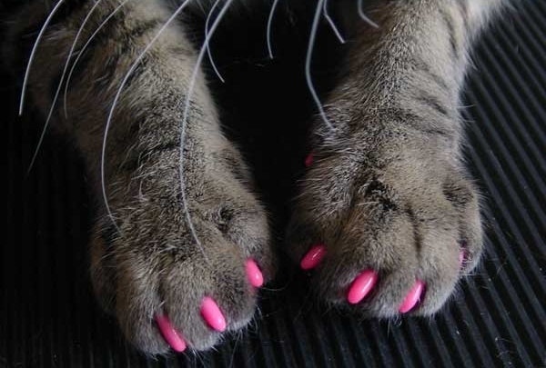 How to avoid cat-scratches image