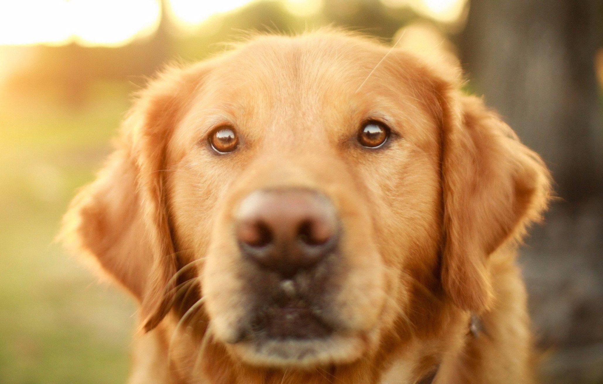 6965572-sunlight-dog-compressed