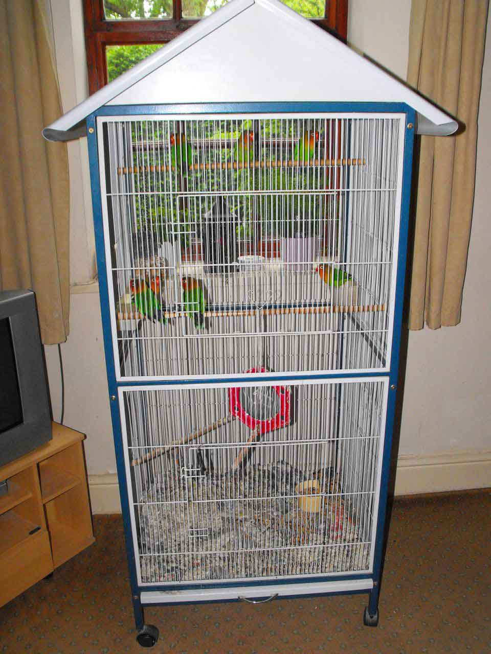 How to take proper care of your love birds image
