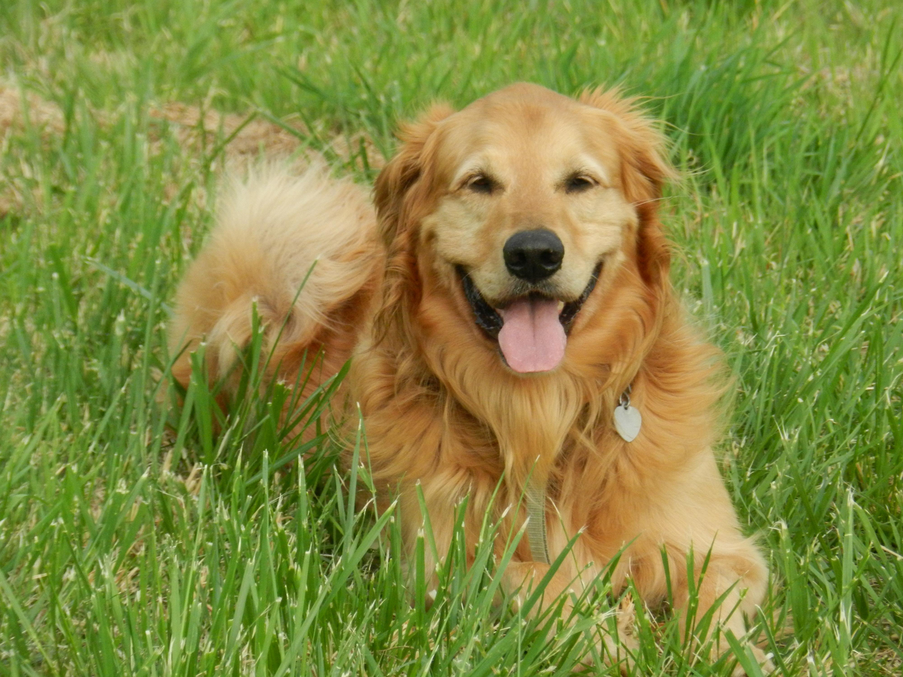 Signs your dog might have 'Pica' image