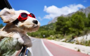 7 Tips for a Road Trip With Your Dog image