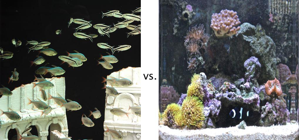 Freshwater vs saltwater image