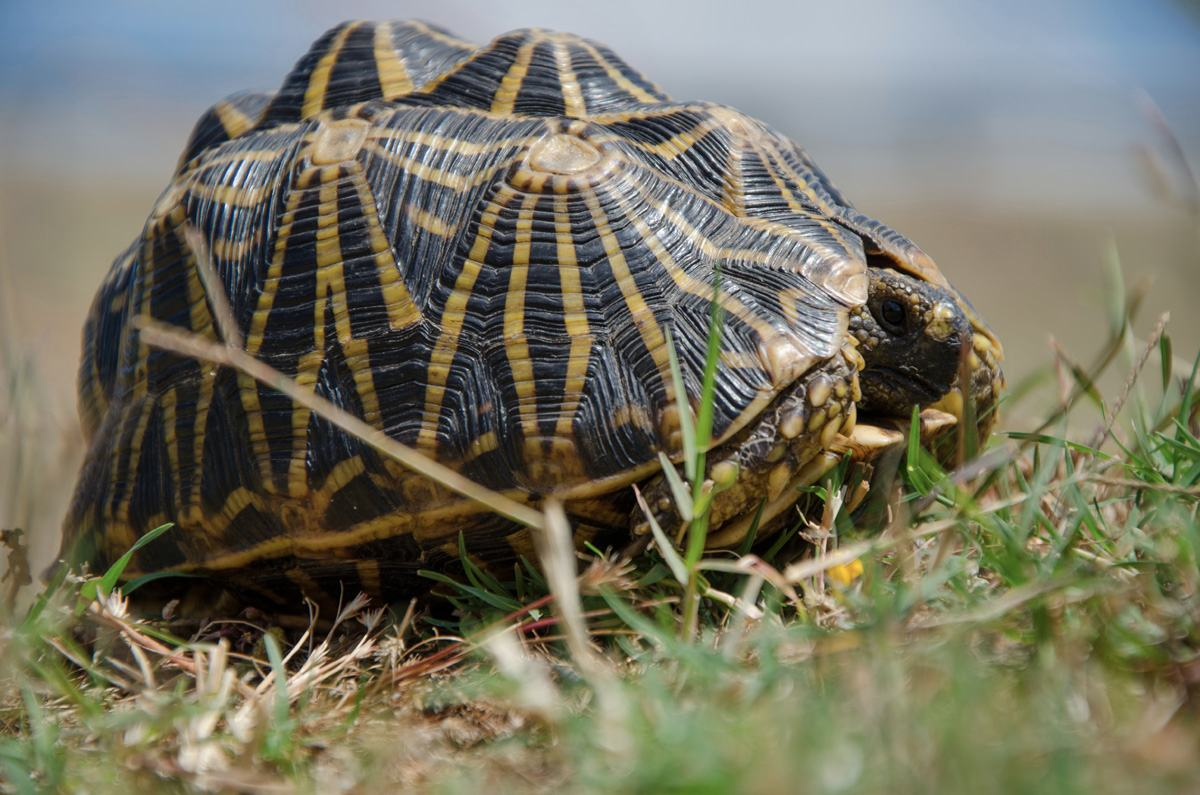 Is your tortoise acting weird, this is why! image