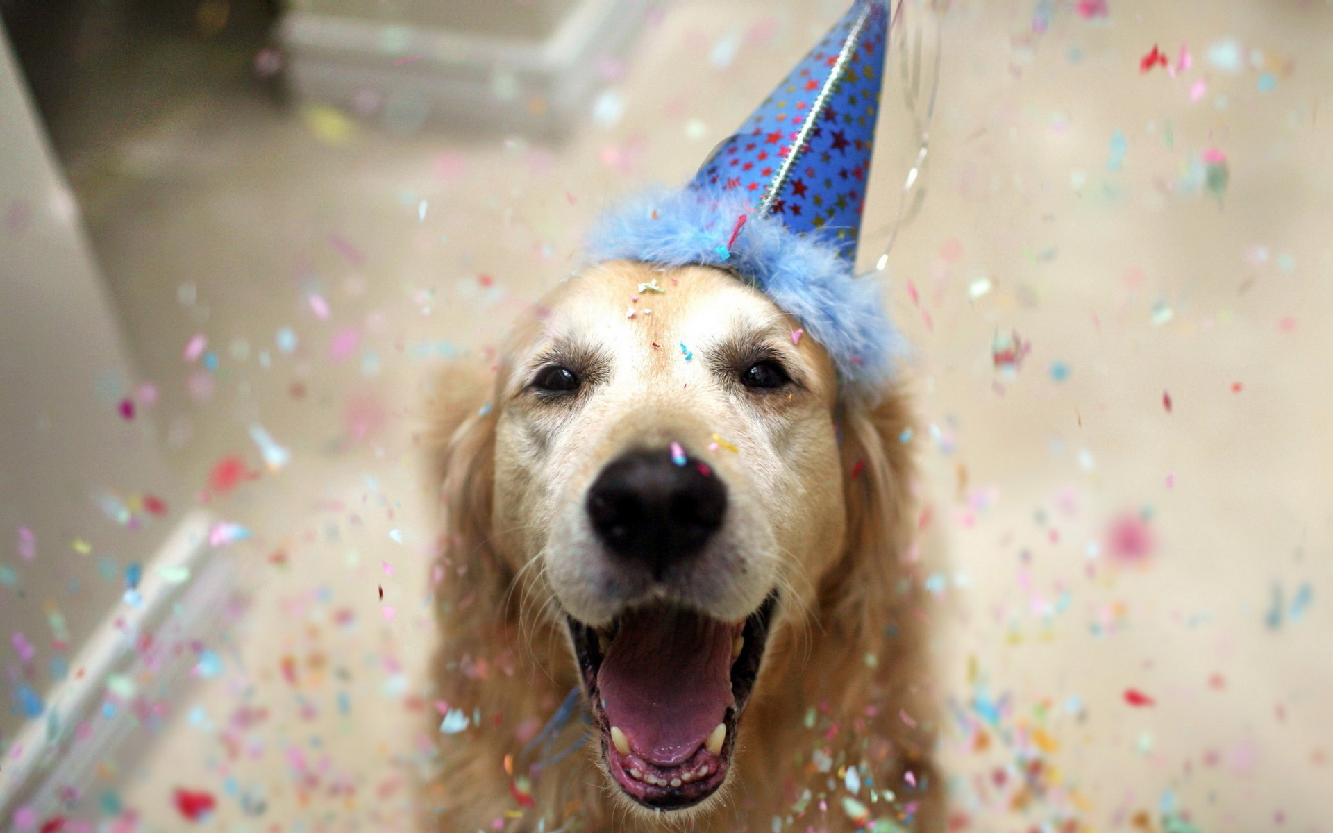 Easy And Fun Ideas To Celebrate Your Puppys First Birthday Header Photo