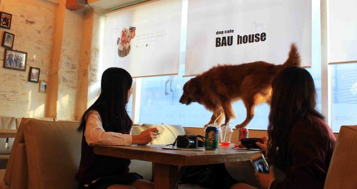 6 Restaurants in Mumbai That Allow Dogs header