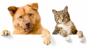Are cats smarter than dogs image