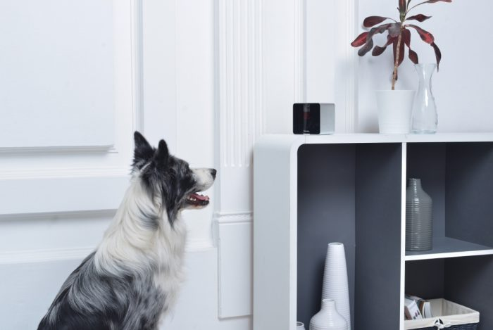 5 gadgets that let you remotely care for your pets header photo Header