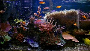 Choosing the right fish mix for your aquarium header photo