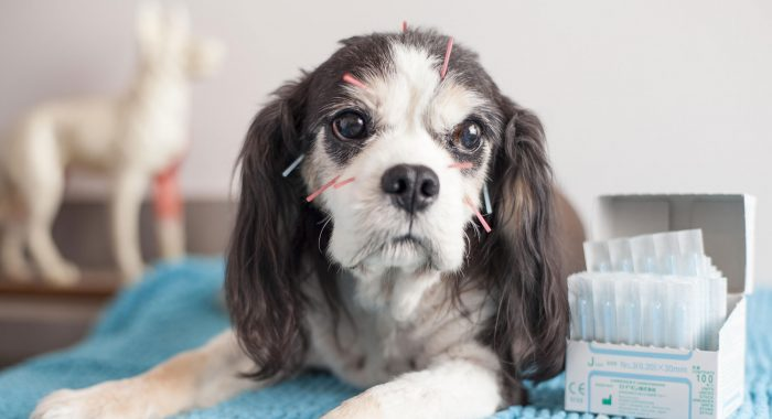 How Can Acupuncture Benefit Your Dog's Health? header