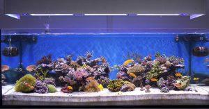 Freshwater vs saltwater header photo