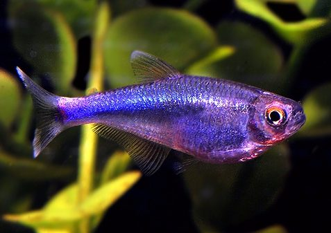 Which Fish to Consider If You're Looking for a No-fuss Tank image