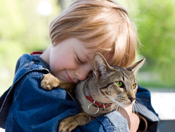 7 things you should never do to your cat image