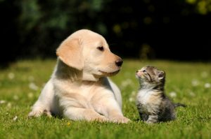 How to calm the storm between your cat and dog header photo