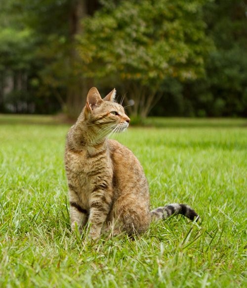 keep cats out of vegetable garden