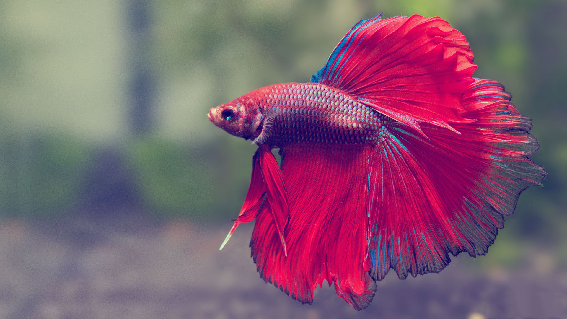Which Fish to Consider If You're Looking for a No-fuss Tank