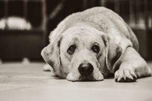 How to Recognise the Warning Signs of Dog Depression image