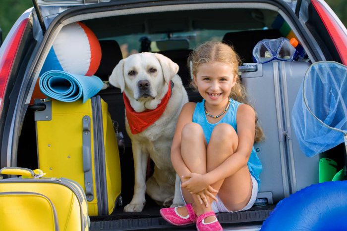 Top 5 Activities You Can Do With Your Dog This Summer. image