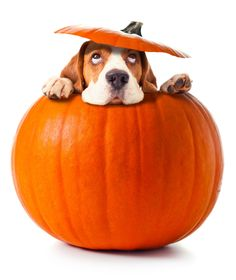 Fruits and Vegetables that make your dog healthy image