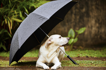 Can Dogs Predict Weather image
