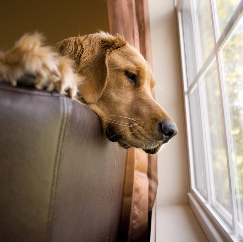 What Does Your Pet Fear? image