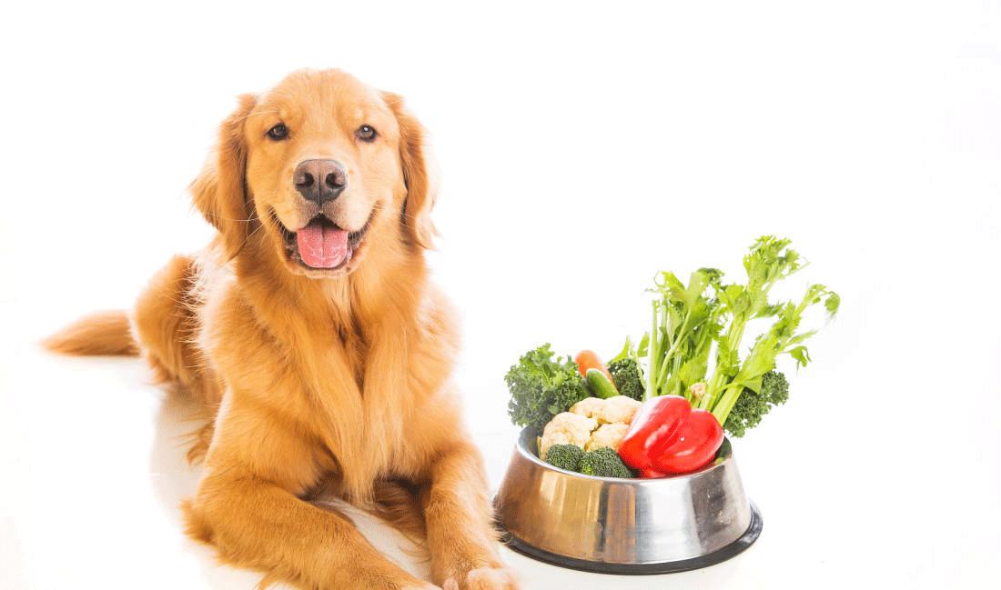 dog-vegetables-food-bowl
