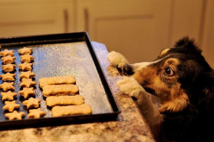 3 home food recipes that you could make for your dog image