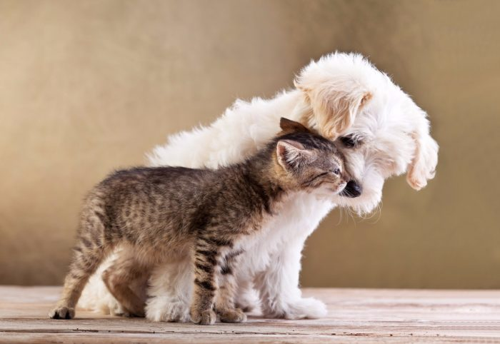 How To Maintain Your Pets Hygiene Header