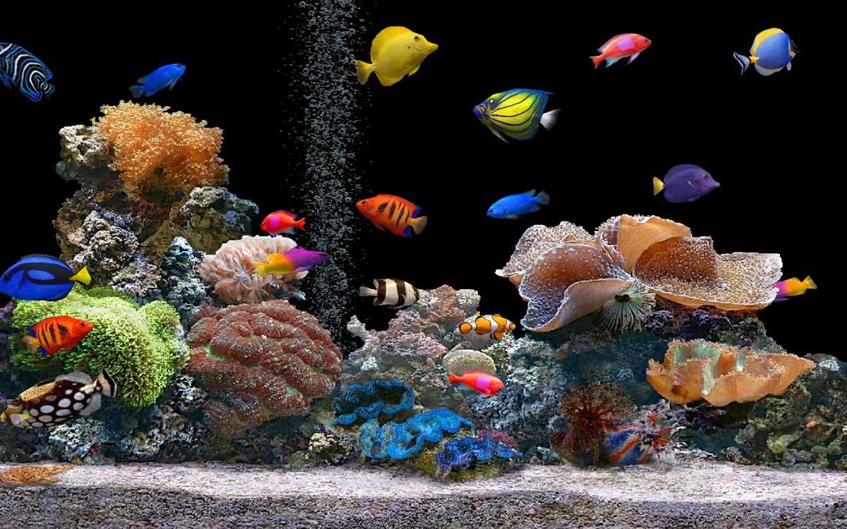 Choosing the right fish mix for your aquarium image