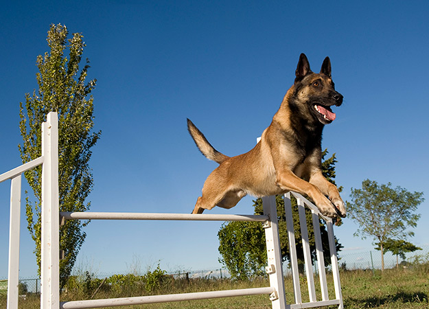 10 things dogs do when they are home alone. image