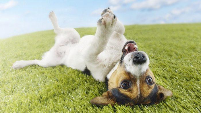 Can Medical Marijuana Cure Your Pet Dogs? image