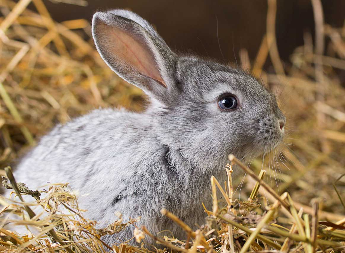 Rabbits love eating these image