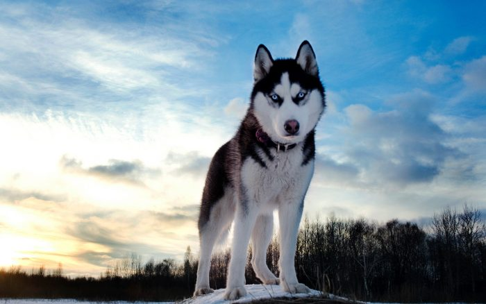 Inspiring Dog rescue stories header
