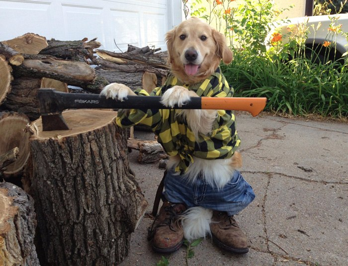 5 Times Dogs Were Cooler Than Hoomans! image
