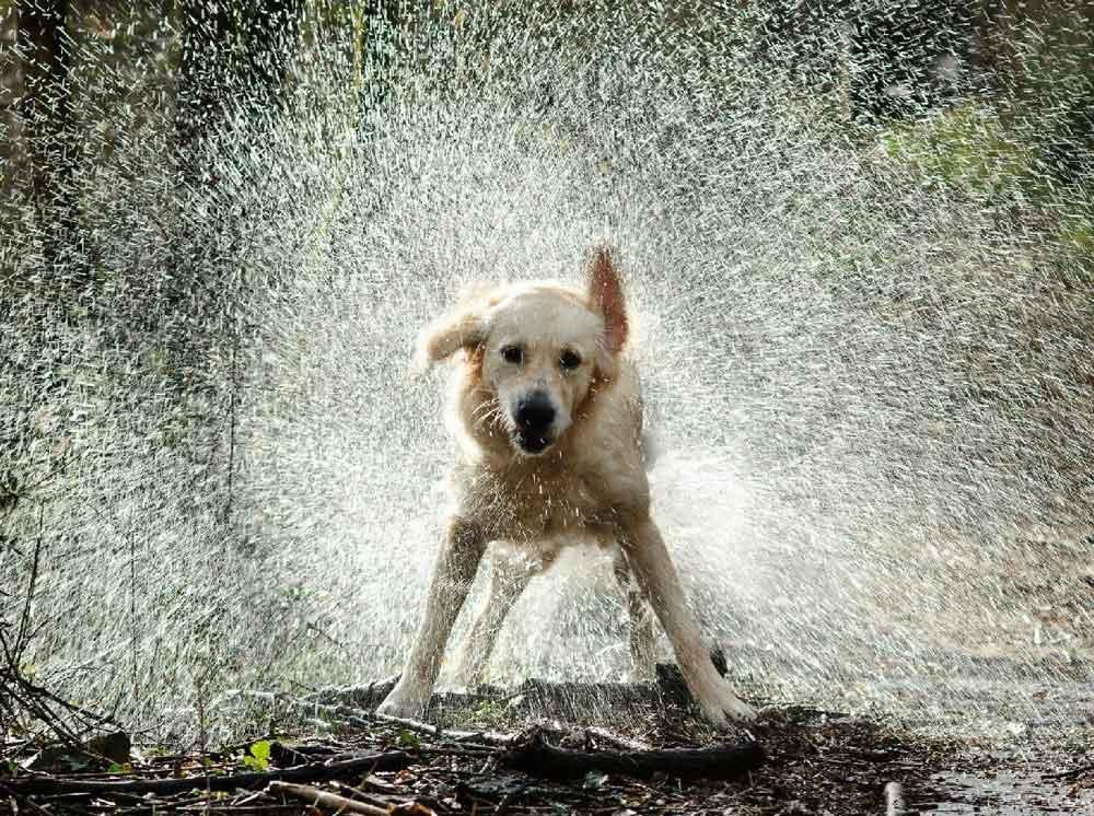 Wet dog smell? image