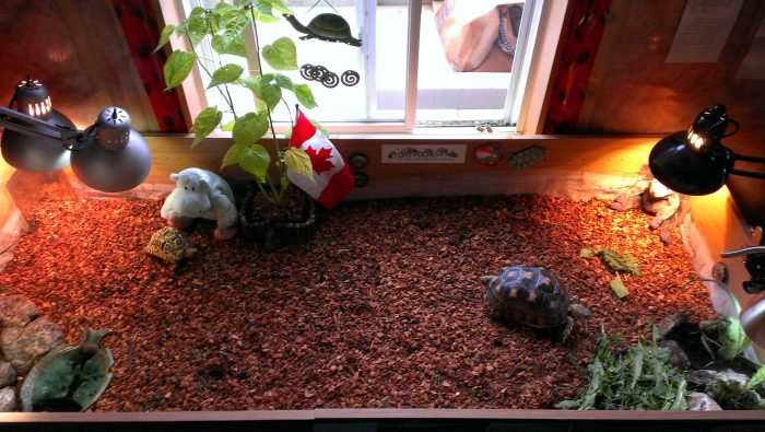 Important Facts About Pet Tortoise Housing header