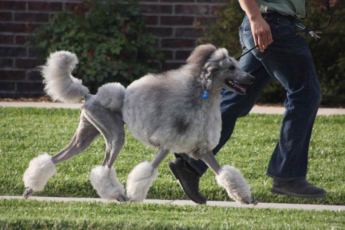 8 Smartest Dog Breeds In The World header