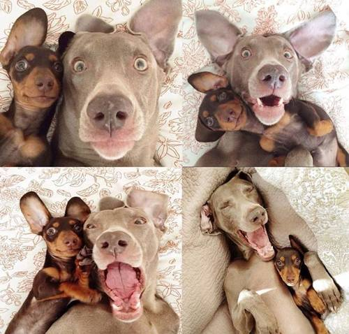 8 times dogs were your relationship goals image