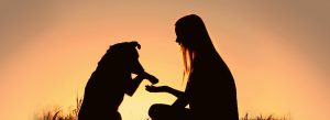 How to Make Your Pet Feel More Affectionate Towards You image