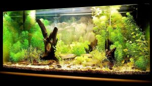 8 Things You Need to Setup Your Own Little Aquarium image