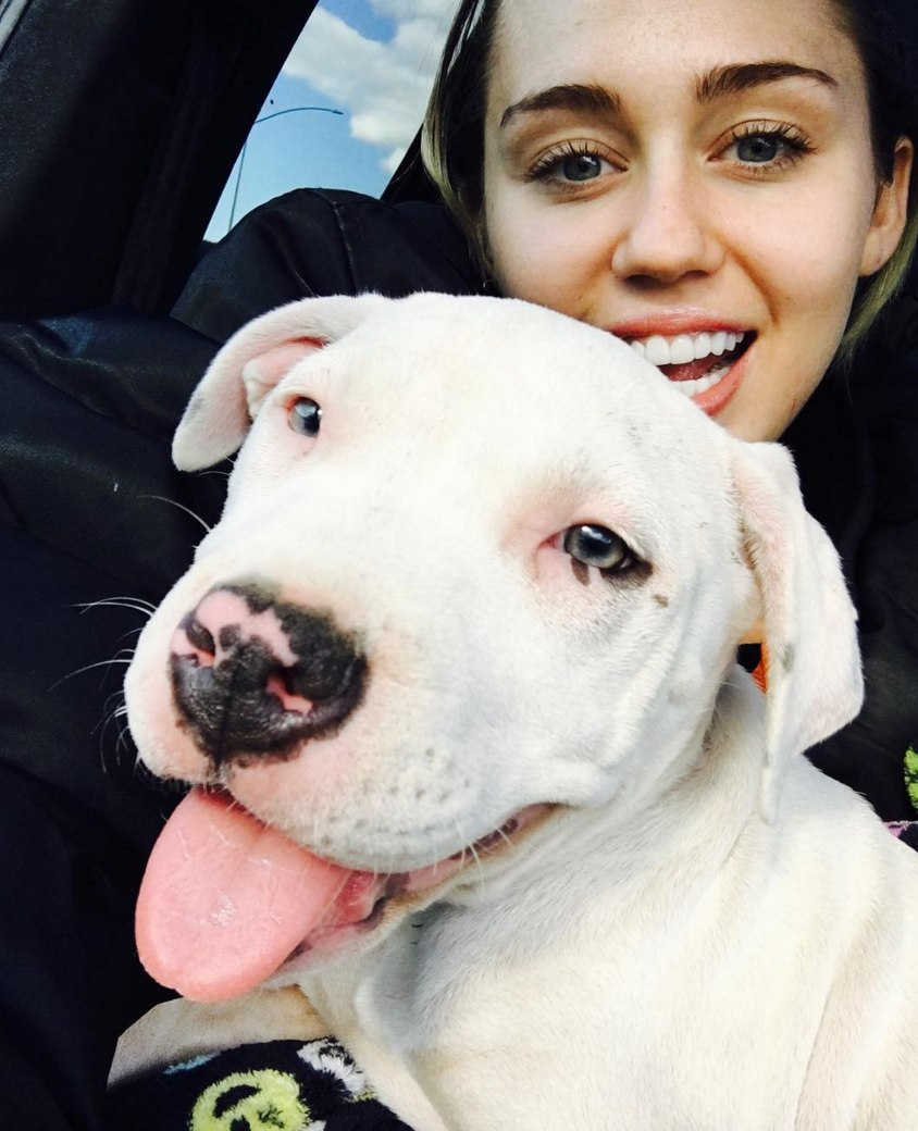 8 Hollywood Celebrities With the Cutest Pets image