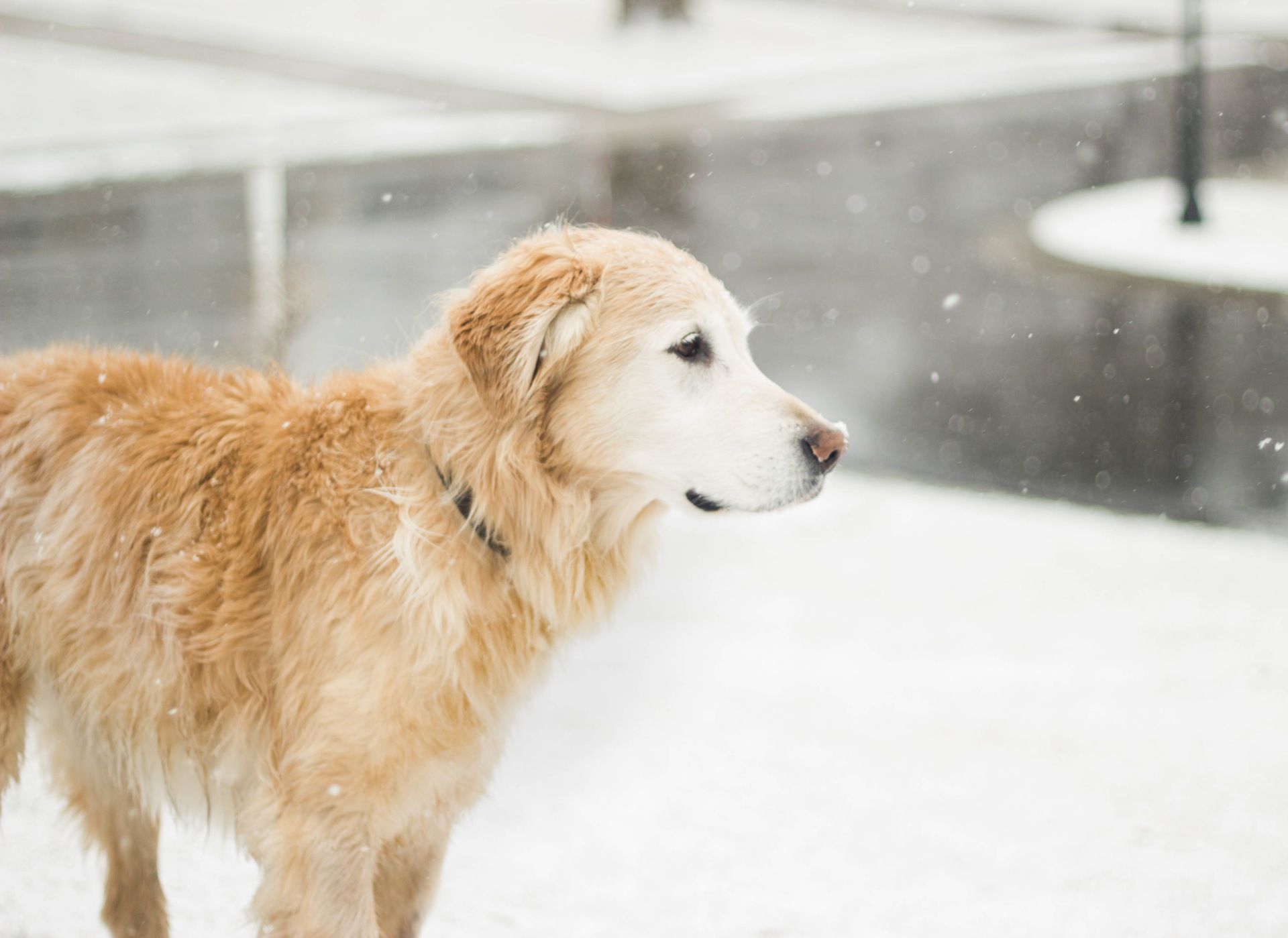 7 Things That Will Make Your Dog Love You Header