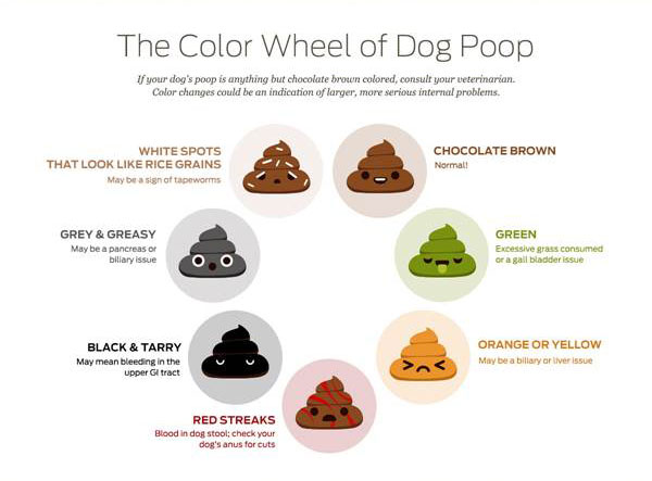 All the scoop about dog poop! image