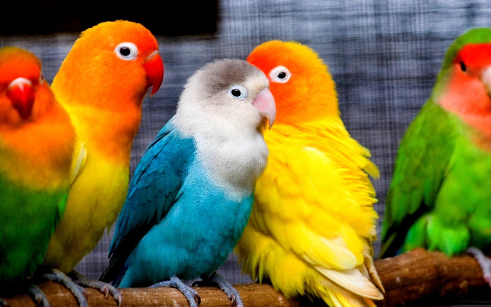 5 Unbelievably Cool Things Birds Can Do! image