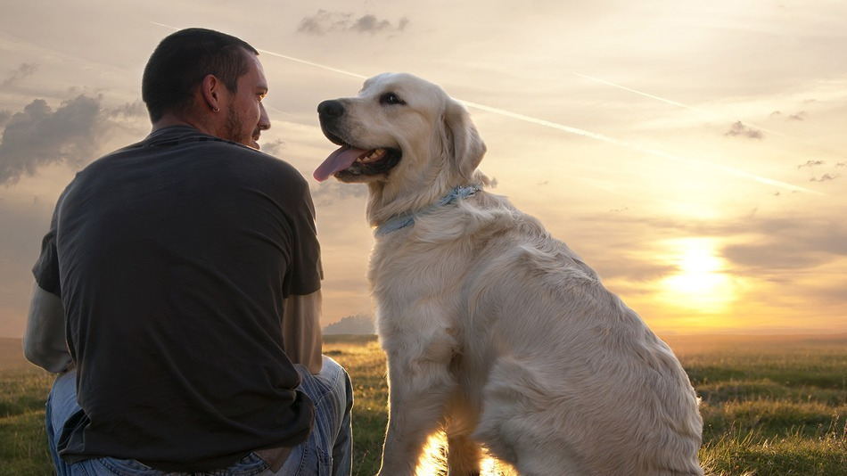 Why a dog is a man's best friend 1
