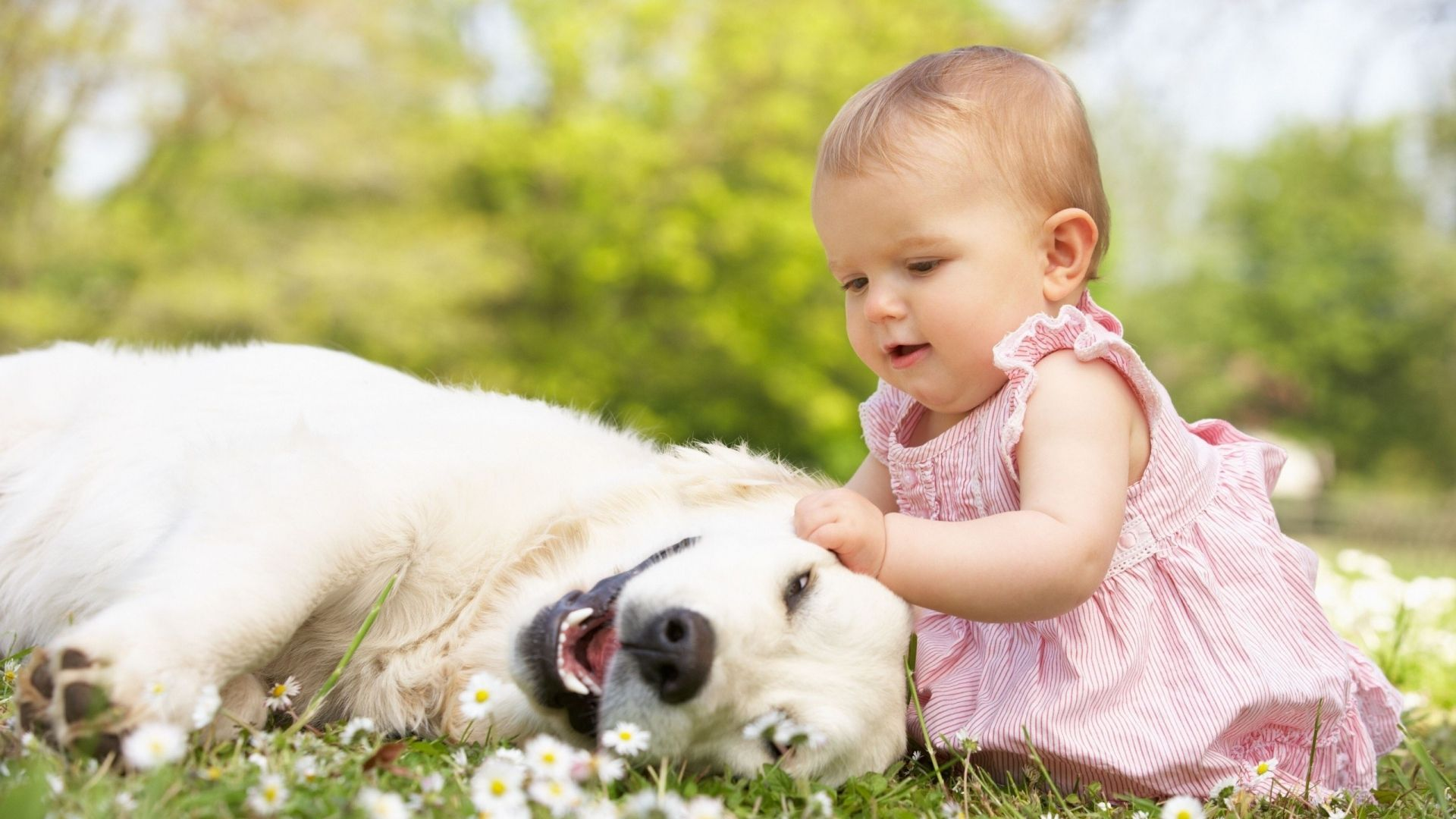 Can Dogs Prevent Asthma in Children - Featured Image